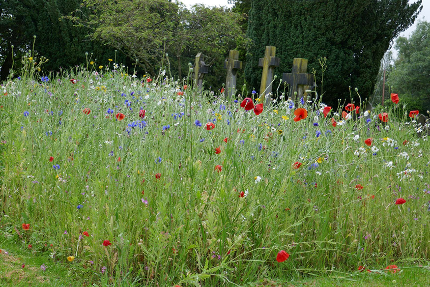 Photograph of wild flowers in the churchyard